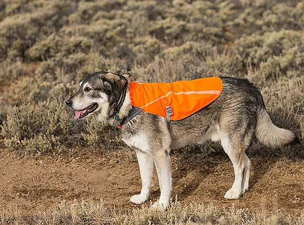 Ruffwear Dog Track Jacket